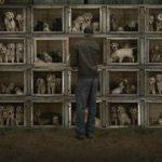 granjas de cachorros