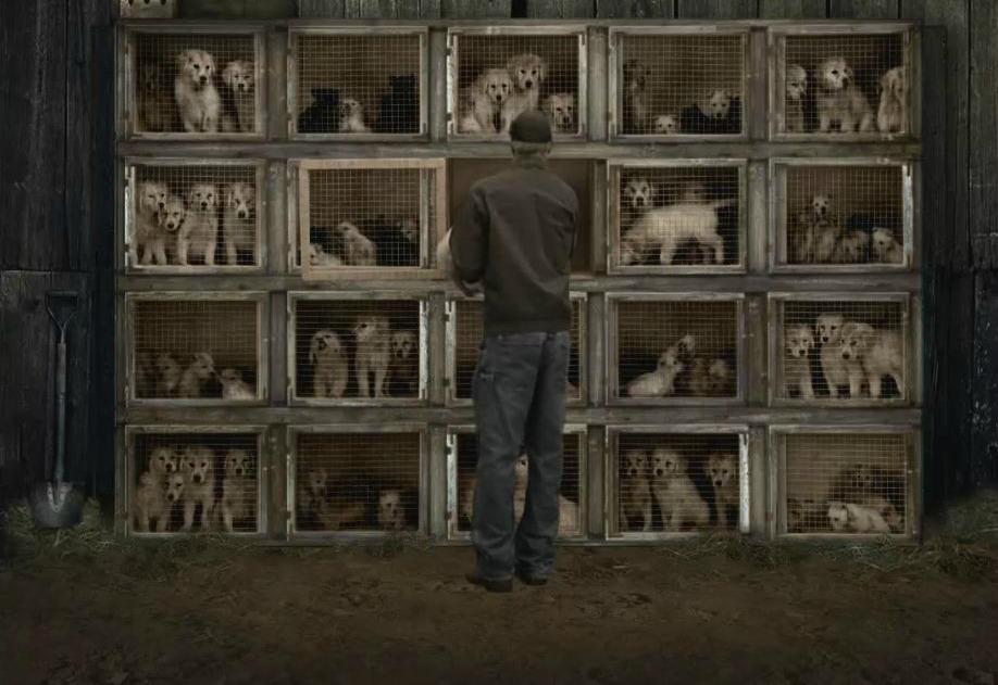 Resultado de imagen para granjas de cachorros