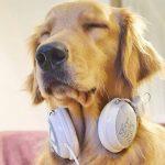 efecto de la música en el perro