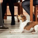 perro pide comida en la mesa