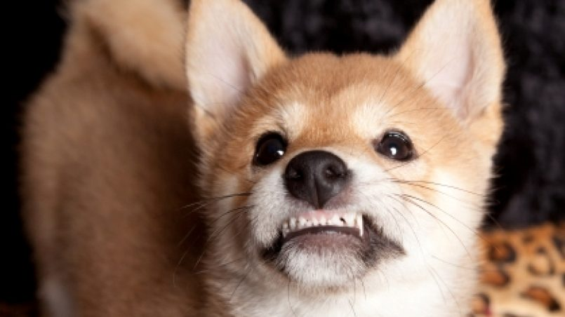 agresividad perros