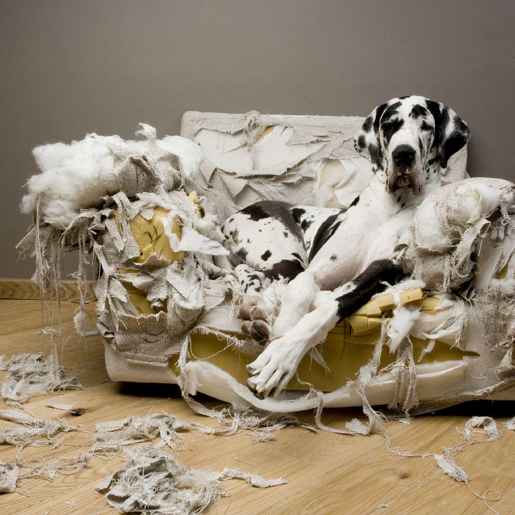 ansiedad por separación del cachorro