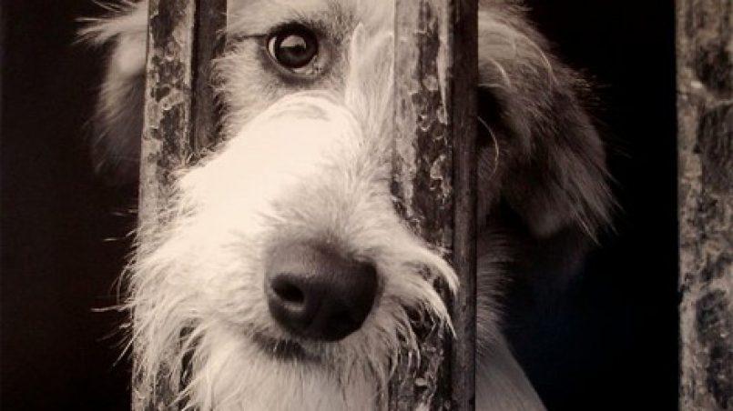 denunciar maltrato animal