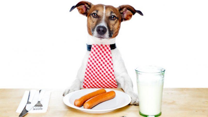 intoxicaciones alimentarias en perros