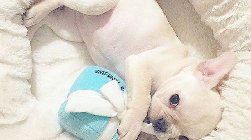 cuántos juguetes necesita un perro