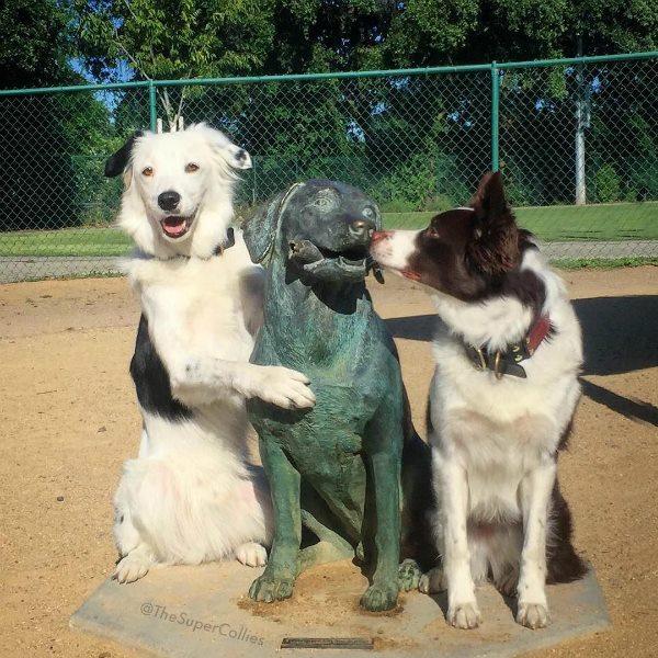 mejorar habilidades sociales del perro