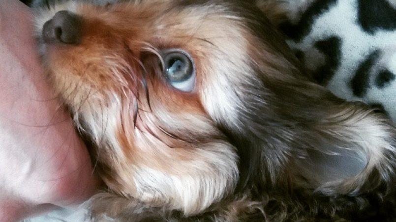 cómo dar medicamento a un perro