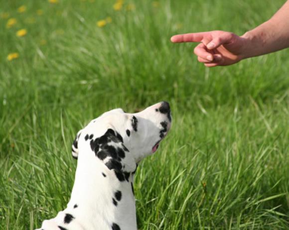 cachorro dominante