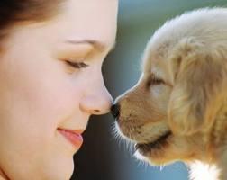alergia a perros