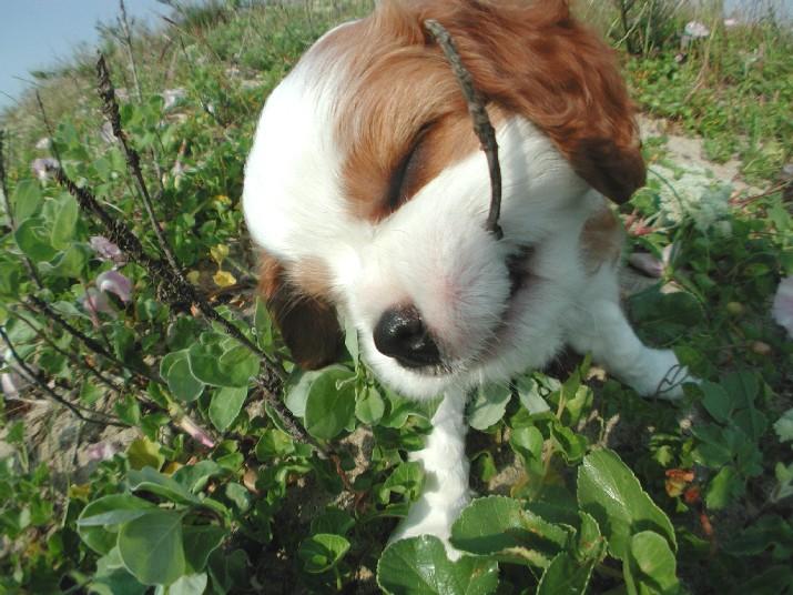 plantas venenosas para el perro