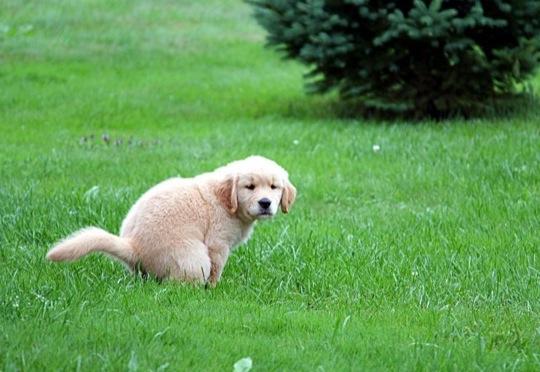 enseñar a un cachorro a ir al baño