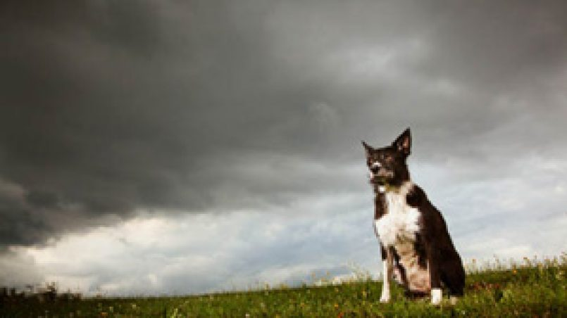 miedo a las tormentas
