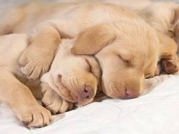 por qué tener un seguro para perros