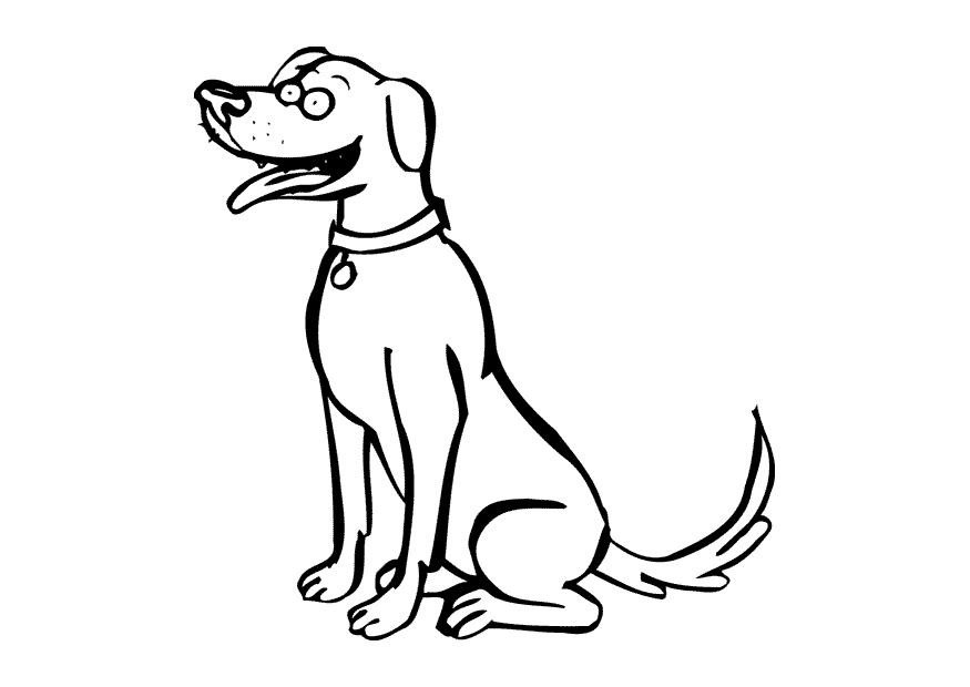 cachorro - Cómo educar a un cachorro