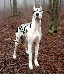 Las 10 razas de perros más grandes - Cómo educar a un cachorro