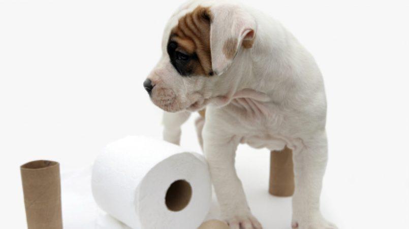 orina perro
