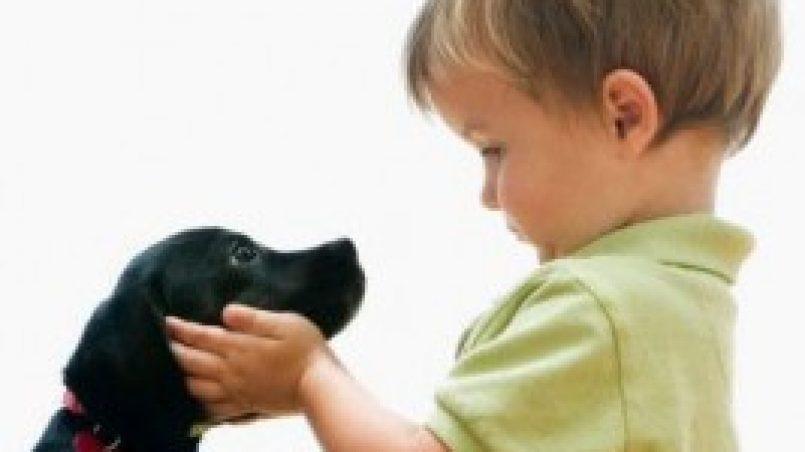 perros entienden palabras humanas