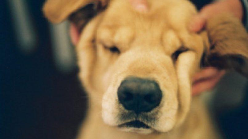 masaje canino para cachorros
