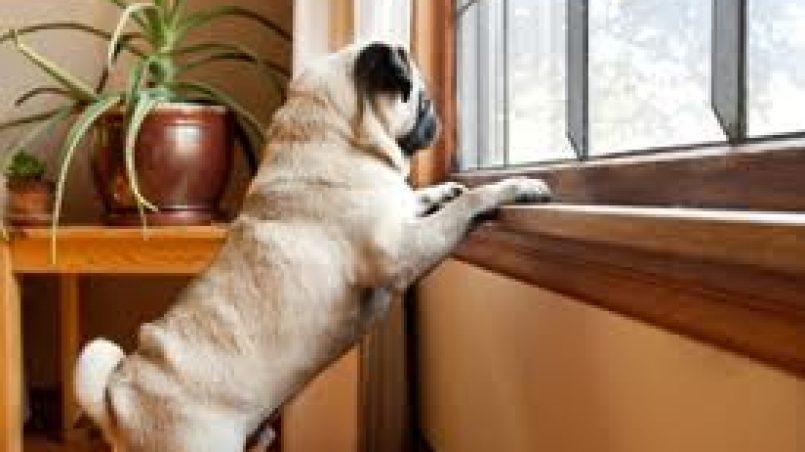 cachorro que se queda solo