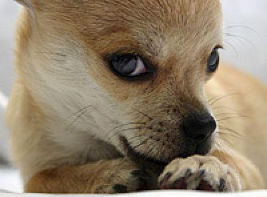 lamido en perros