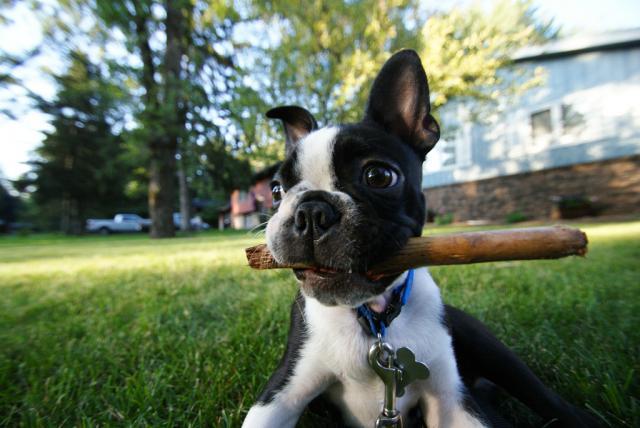 cachorro con palo de madera