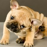 cachorro con pulgas