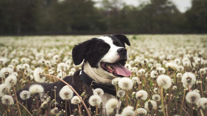 perro rasca el suelo tras hacer sus necesidades