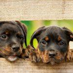 imprinting o impronta en perros