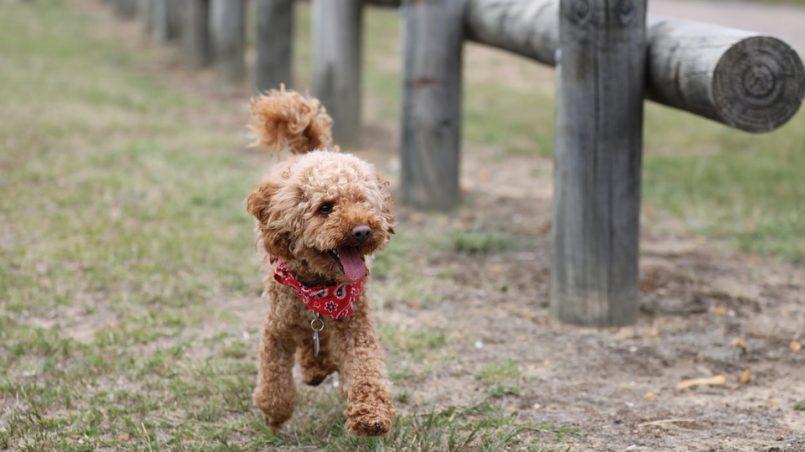 nombres para perros y perras con F