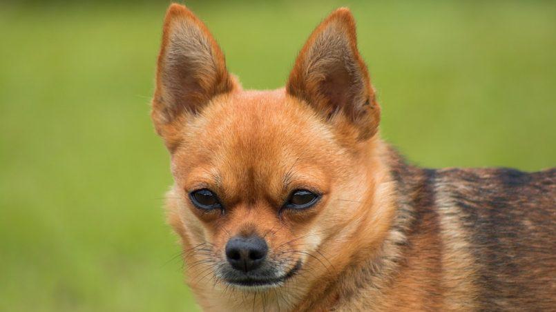artículos educación canina