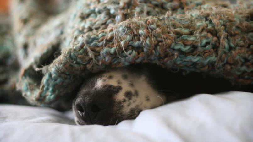 perro que duerme bajo la cama
