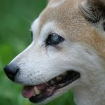 educar a un perro ciego