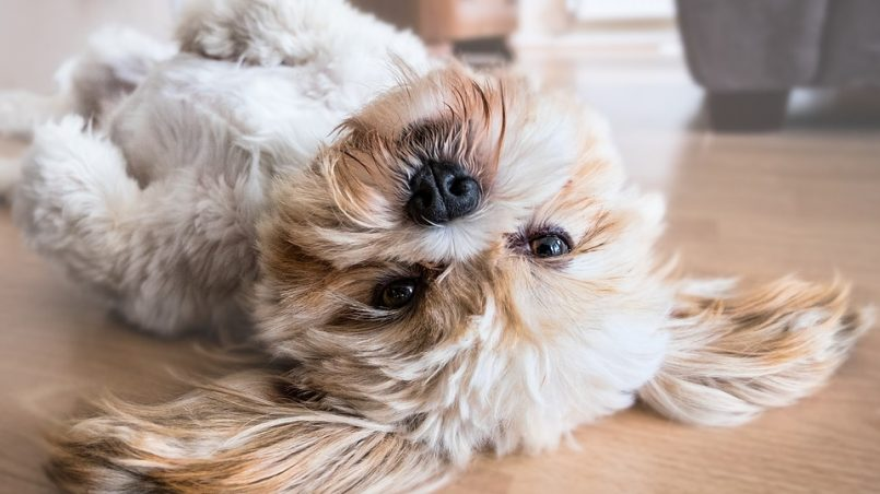 peligros en casa para tu perro