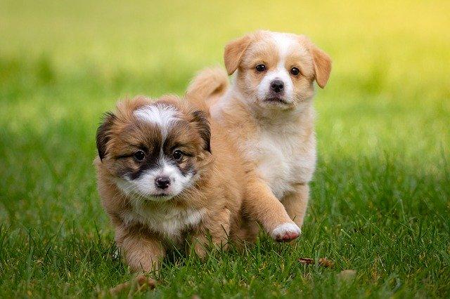adoptar a un cachorro