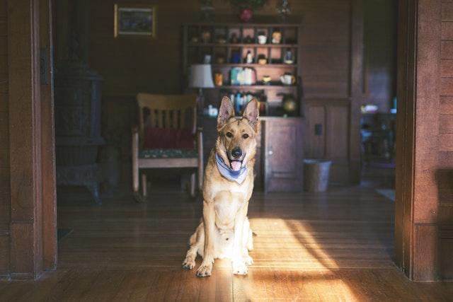 limpiar un hogar con perro