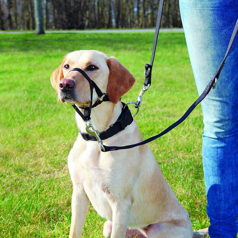 bozal de entrenamiento para perros