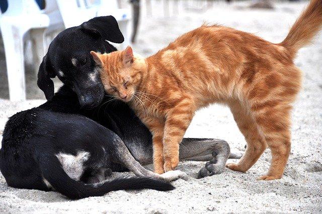 cómo presentar un perro y un gato