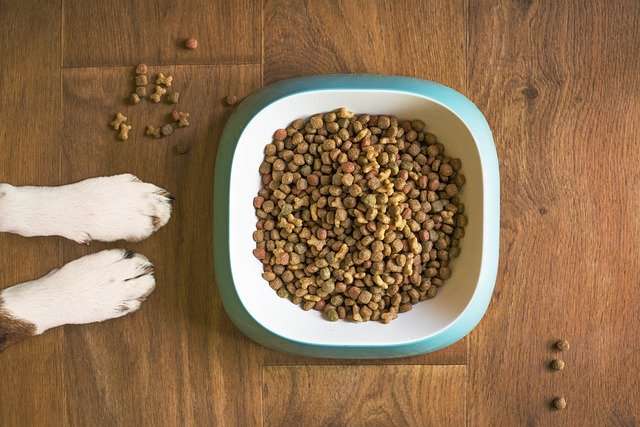 piensos hipoalergénicos para perros
