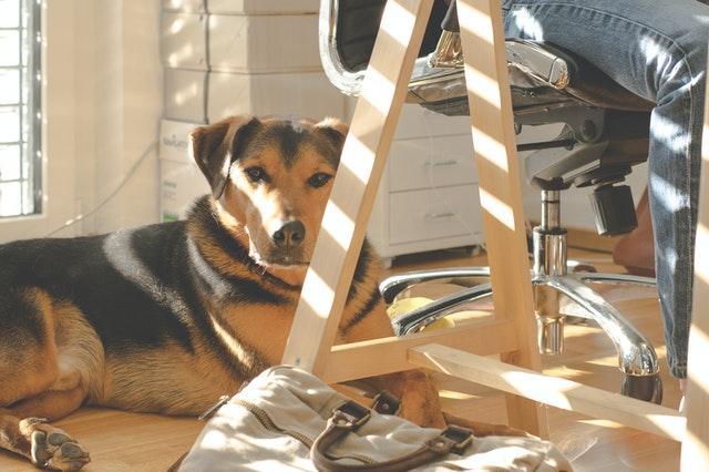 por que a los perros les gusta tomar el sol