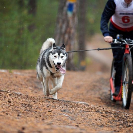 deportes caninos