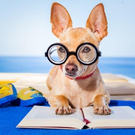 miopía en perros