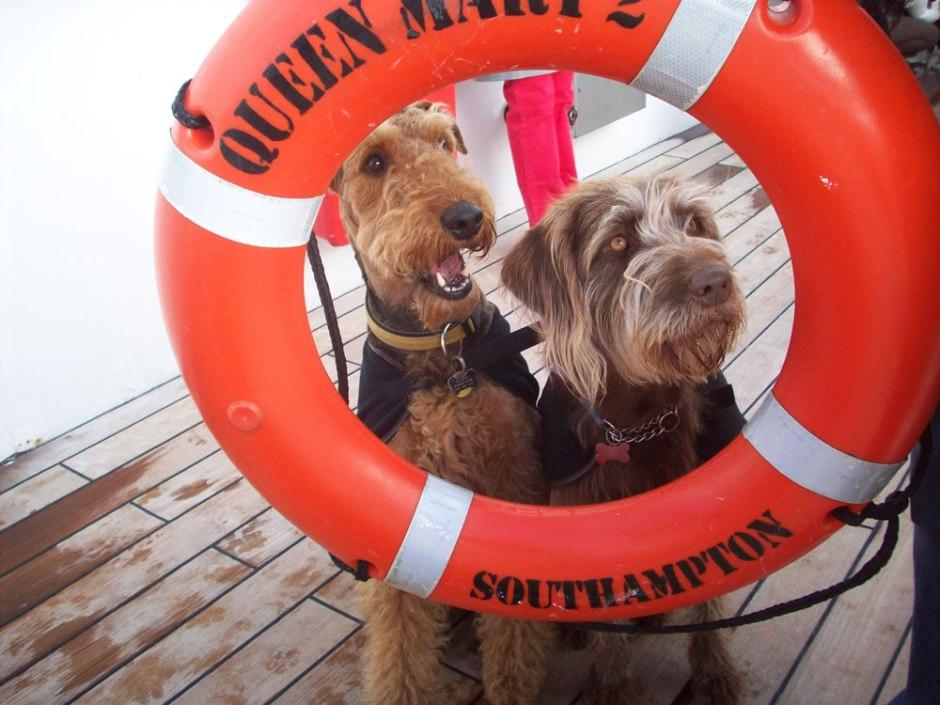 crucero con perro