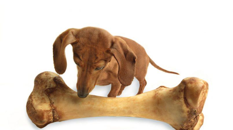 dar huesos a un cachorro