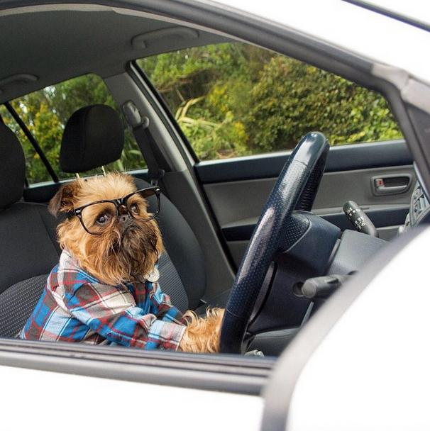 cómo viajar con tu perro seguro en coche