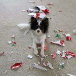 cachorro come periódico