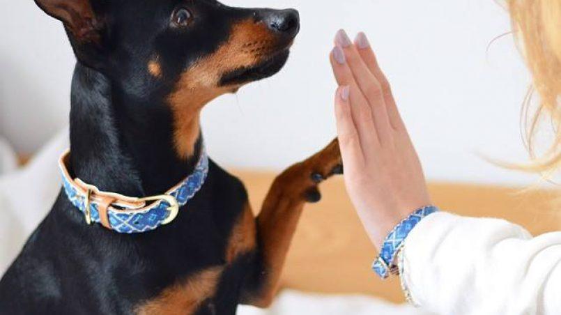 vínculo entre perro y propietario