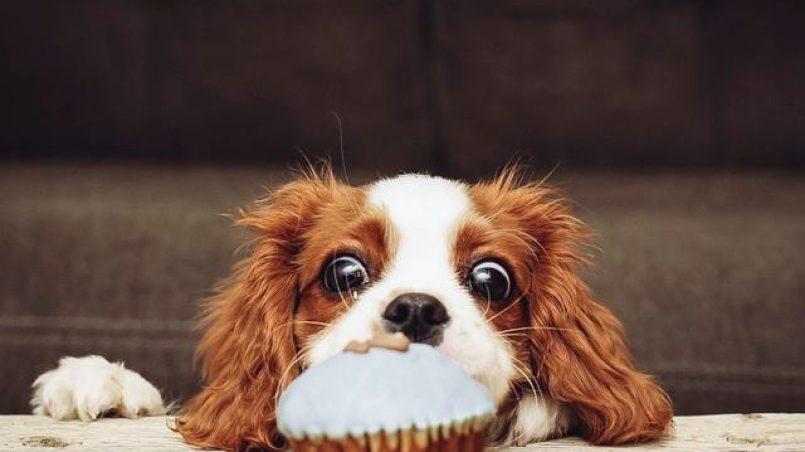 mi perro siempre tiene hambre