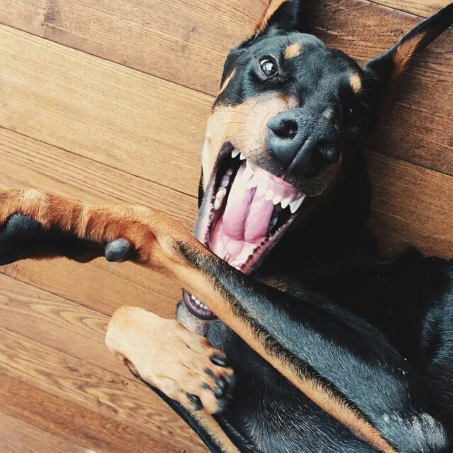 10 situaciones que estresan a tu perro