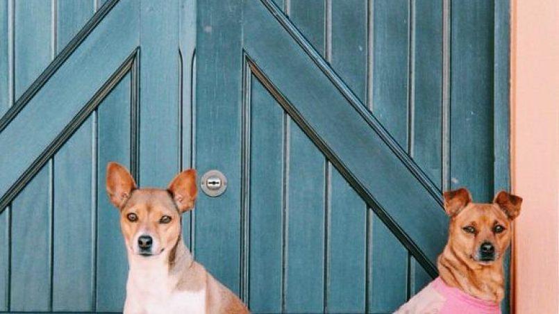razas de perros para proteger el hogar