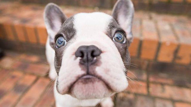 sorto sobre perros para reflexionar